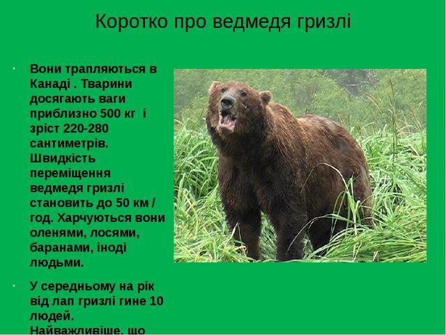 Коротко про ведмедя гризлі Вони трапляються в Канаді . Тварини досягають ваги...