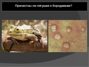 Причастны ли лягушки к бородавкам? Лягушек несправедливо обвиняют в причастн
