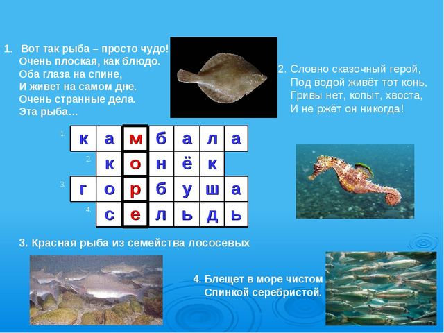 3. Красная рыба из семейства лососевых Вот так рыба – просто чудо! Очень плос...