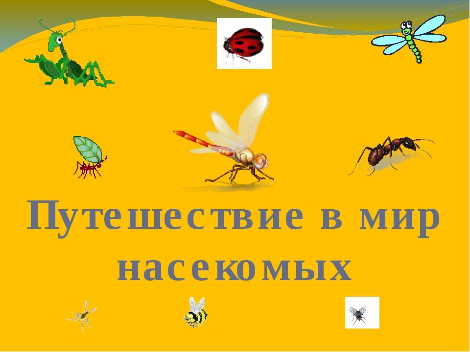 Путешествие в мир насекомых