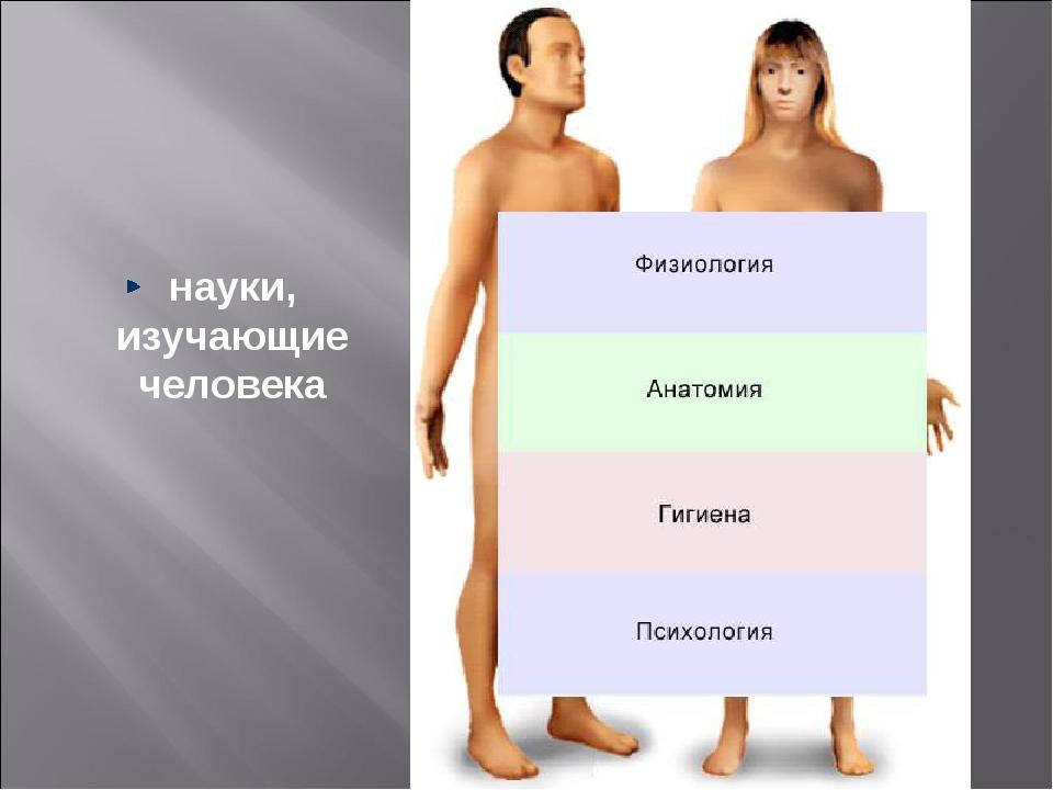 науки, изучающие человека