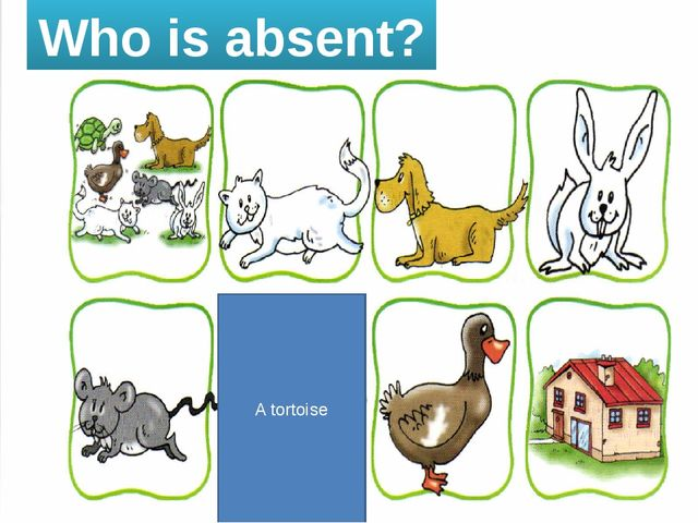Who is absent? A tortoise