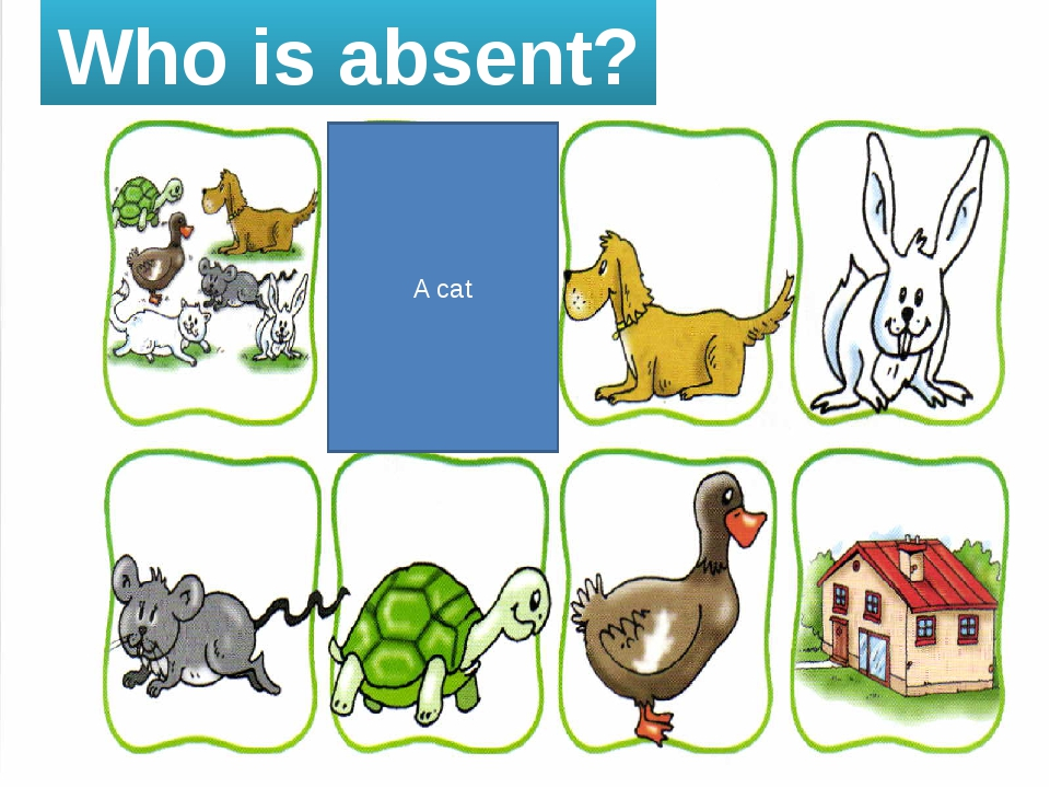 Who is absent? A cat