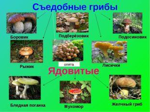 Съедобные грибы Ядовитые Боровик Подосиновик Подберёзовик Рыжик Лисички Бледн