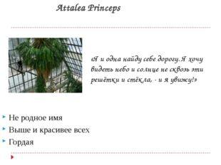Attalea Princeps Не родное имя Выше и красивее всех Гордая «Я и одна найду се