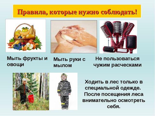 Правила, которые нужно соблюдать! Мыть фрукты и овощи Не пользоваться чужим р...
