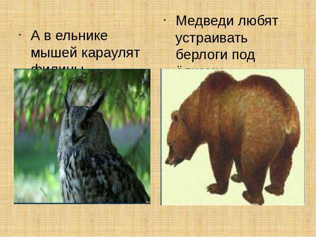 А в ельнике мышей караулят филины. Медведи любят устраивать берлоги под ёлками.