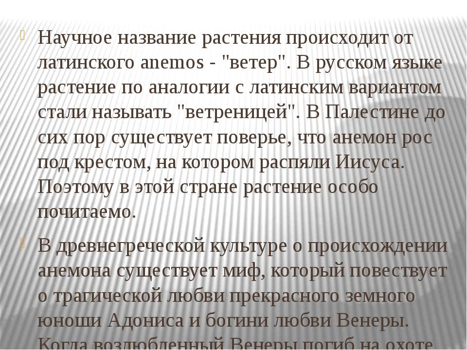 """Научное название растения происходит от латинского anemos - """"ветер"""". В русско..."""