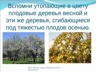 Вспомни утопающие в цвету плодовые деревья весной и эти же деревья, сгибающие