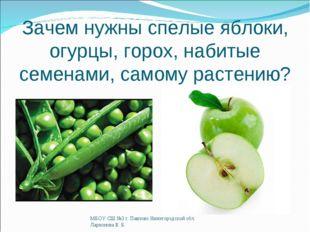 Зачем нужны спелые яблоки, огурцы, горох, набитые семенами, самому растению?
