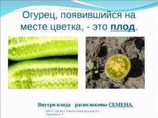 Огурец, появившийся на месте цветка, - это плод. Внутри плода расположены СЕМ