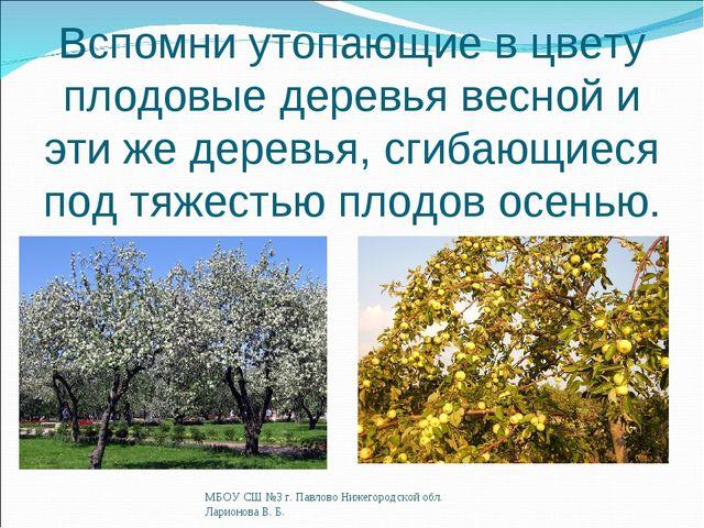 Вспомни утопающие в цвету плодовые деревья весной и эти же деревья, сгибающие...
