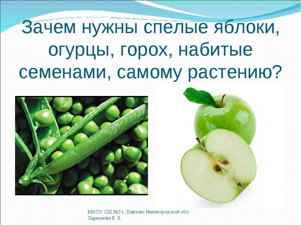 Зачем нужны спелые яблоки, огурцы, горох, набитые семенами, самому растению?...