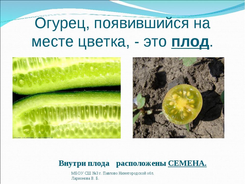 Огурец, появившийся на месте цветка, - это плод. Внутри плода расположены СЕМ...