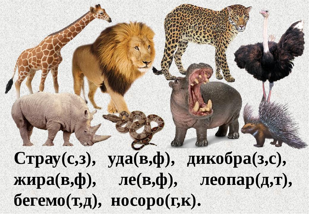 Страу(с,з), уда(в,ф), дикобра(з,с), жира(в,ф), ле(в,ф), леопар(д,т), бегемо(т...