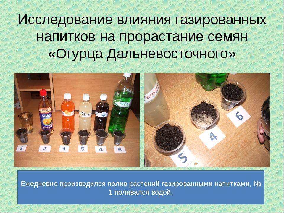 Исследование влияния газированных напитков на прорастание семян «Огурца Дальн...