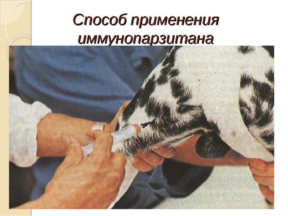 Способ применения иммунопарзитана