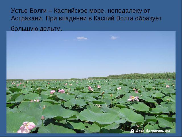 Устье Волги – Каспийское море, неподалеку от Астрахани. При впадении в Каспий...