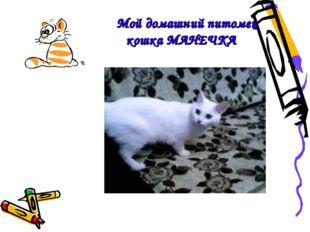 Мой домашний питомец кошка МАНЕЧКА