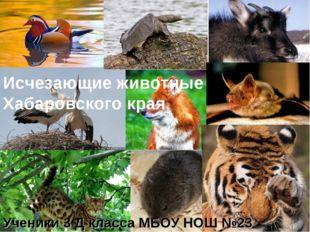 Исчезающие животные Хабаровского края Ученики 3 Д класса МБОУ НОШ №23