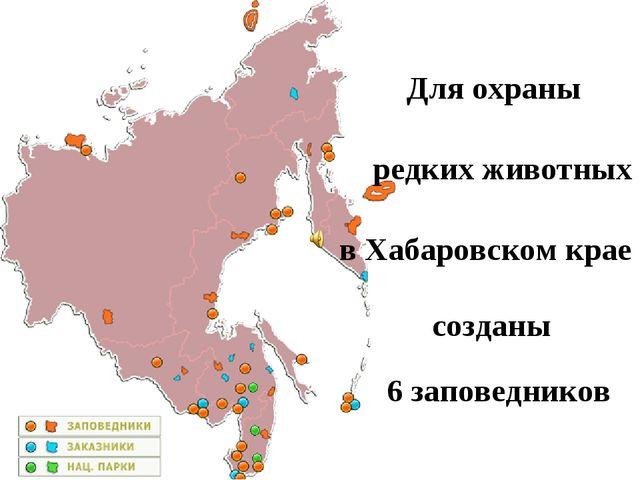 Для охраны редких животных в Хабаровском крае созданы 6 заповедников