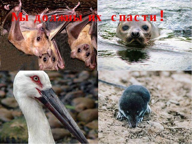 Мы должны их спасти!