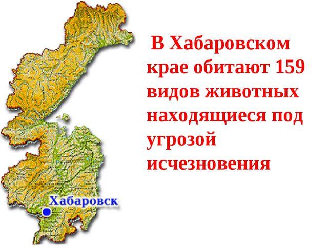 В Хабаровском крае обитают 159 видов животных находящиеся под угрозой исчезн...