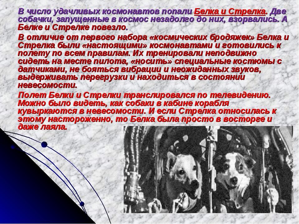 В число удачливых космонавтов попали Белка и Стрелка. Две собачки, запущенны...