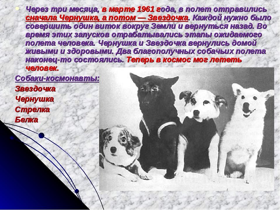 Через три месяца, в марте 1961 года, в полет отправились сначала Чернушка, а...