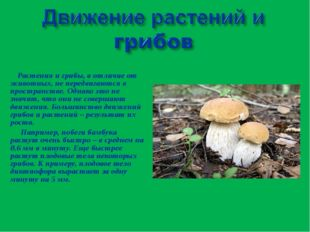 Растения и грибы, в отличие от животных, не передвигаются в пространстве. Од