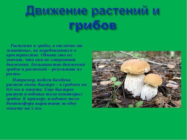 Растения и грибы, в отличие от животных, не передвигаются в пространстве. Од...