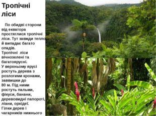 Тропічні ліси По обидві сторони від екватора простяглися тропічні ліси. Тут з