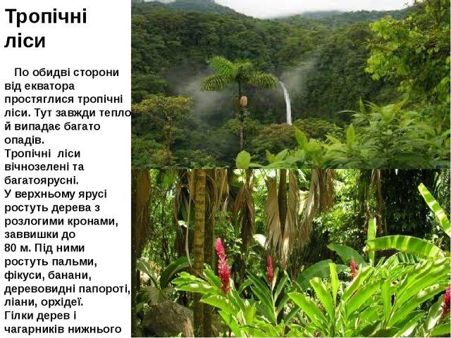 Тропічні ліси По обидві сторони від екватора простяглися тропічні ліси. Тут з...