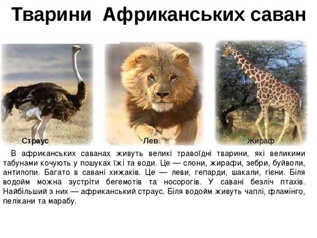 Тварини Африканських саван В африканських саванах живуть великі травоїдні тва...
