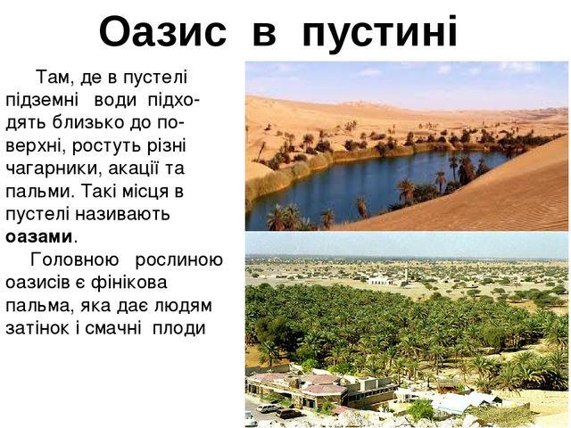 Оазис в пустині Там, де в пустелі підземні води підхо- дять близько до по-ве...