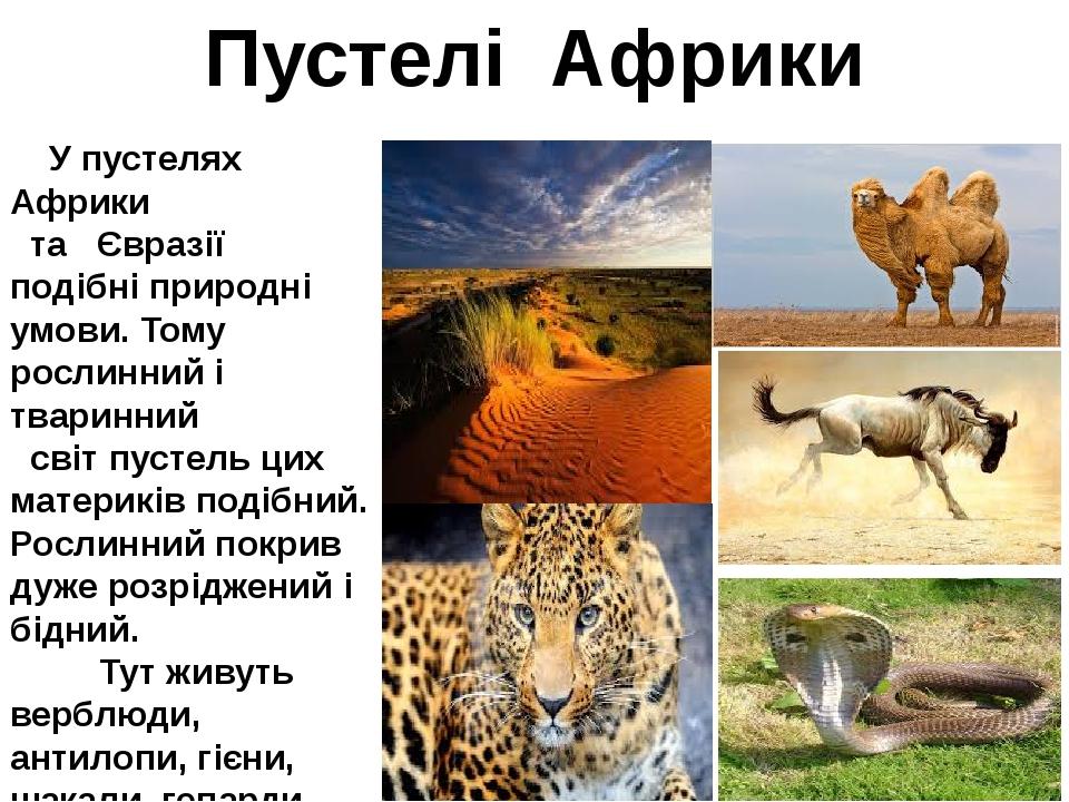 Пустелі Африки У пустелях Африки та Євразії подібні природні умови. Тому росл...