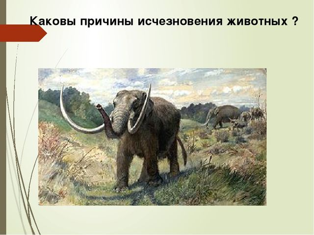 Каковы причины исчезновения животных ?
