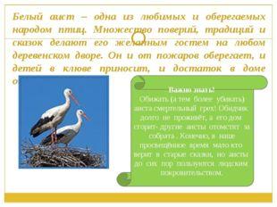 Белый аист – одна из любимых и оберегаемых народом птиц. Множество поверий, т