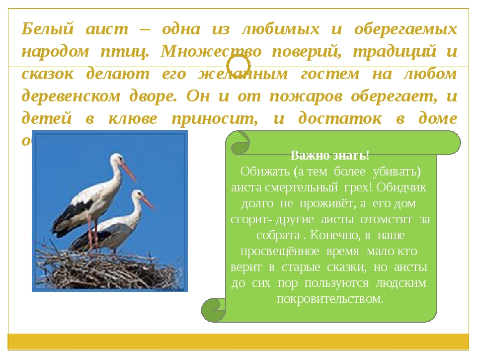 Белый аист – одна из любимых и оберегаемых народом птиц. Множество поверий, т...