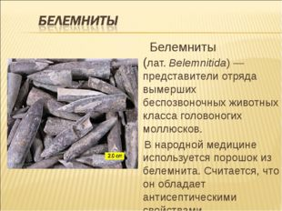Белемниты (лат.Belemnitida)— представители отряда вымерших беспозвоночных
