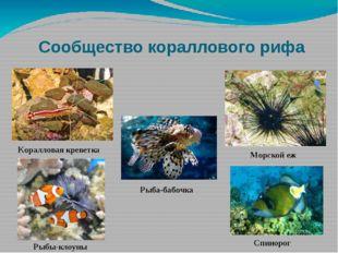 Сообщество кораллового рифа Морской еж Коралловая креветка Рыбы-клоуны Рыба-б