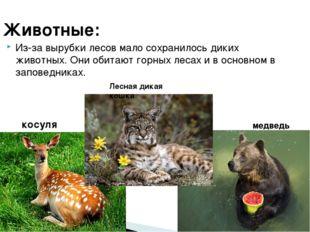 Животные: Из-за вырубки лесов мало сохранилось диких животных. Они обитают го