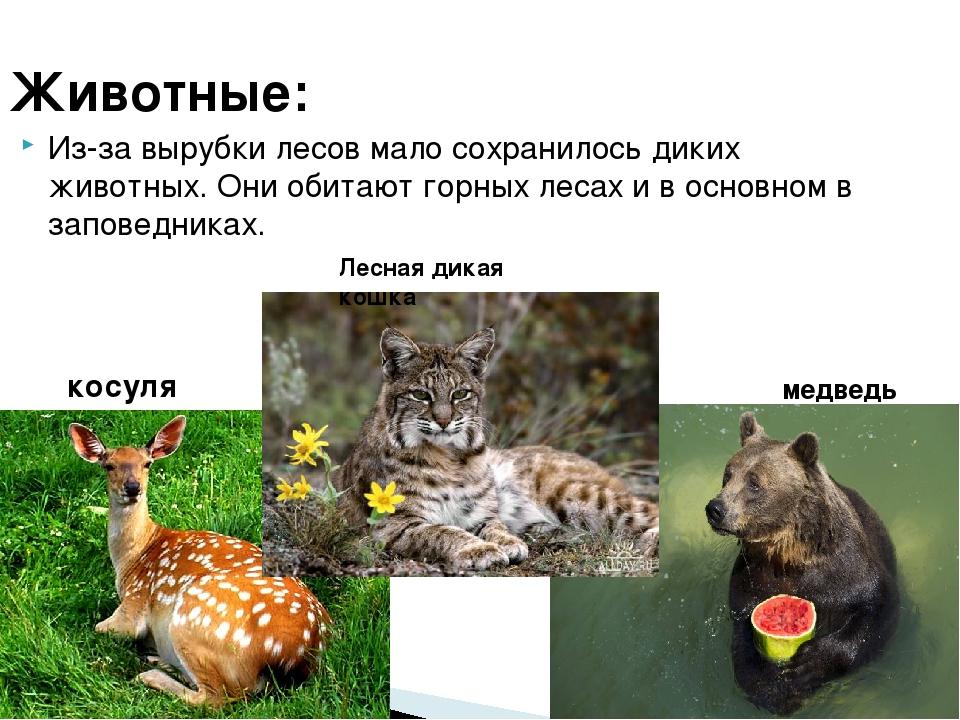 Животные: Из-за вырубки лесов мало сохранилось диких животных. Они обитают го...