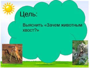 Цель: Выяснить «Зачем животным хвост?»