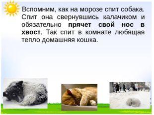 Вспомним, как на морозе спит собака. Спит она свернувшись калачиком и обязат