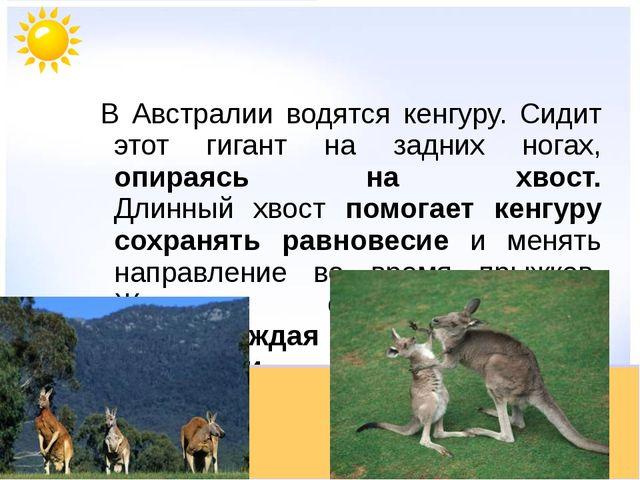 В Австралии водятся кенгуру. Сидит этот гигант на задних ногах, опираясь на х...