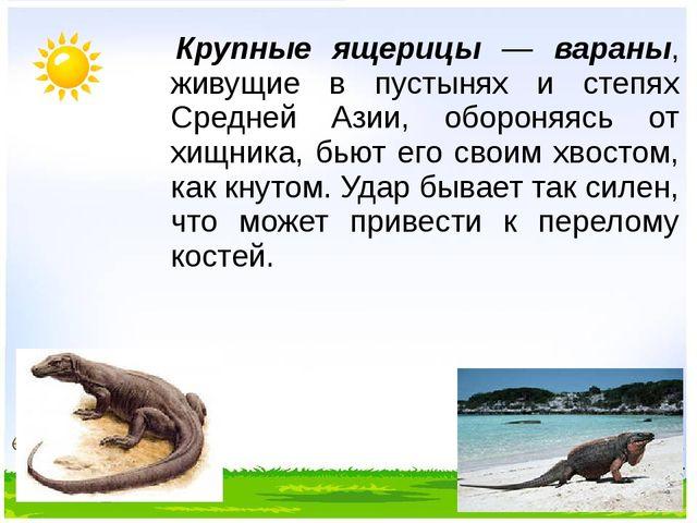 Крупные ящерицы — вараны, живущие в пустынях и степях Средней Азии, обороняя...