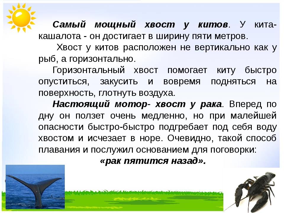 Самый мощный хвост у китов. У кита- кашалота - он достигает в ширину пяти ме...