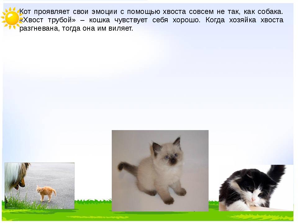 Кот проявляет свои эмоции с помощью хвоста совсем не так, как собака. «Хвост...