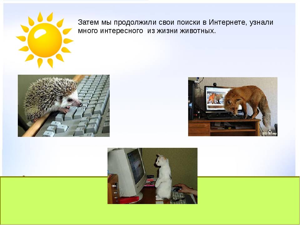 Затем мы продолжили свои поиски в Интернете, узнали много интересного из...